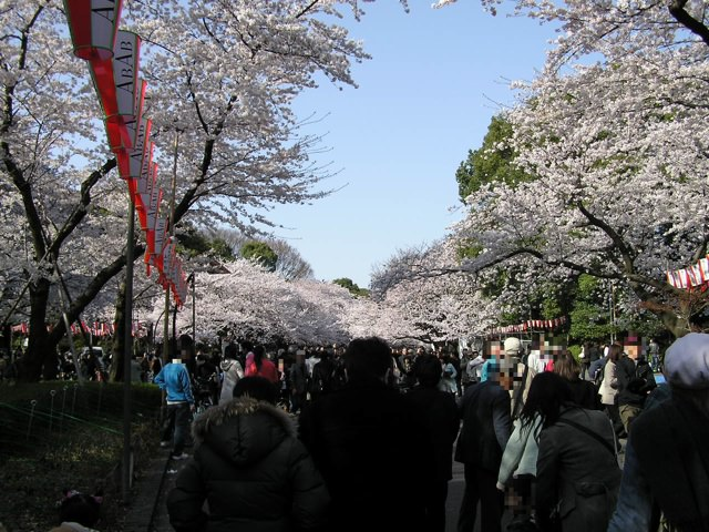 "Ueno Park is very crowded with many people all day during ""Sakura Festival""."