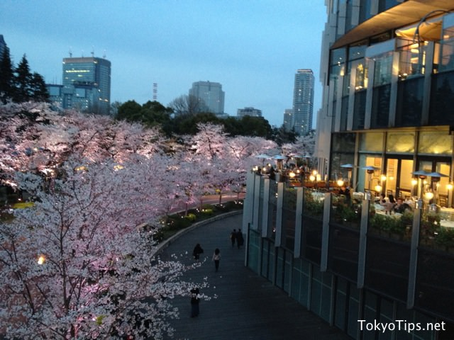 Cherry blossoms bloom fully at Tokyo Midtown on March 23 2013.