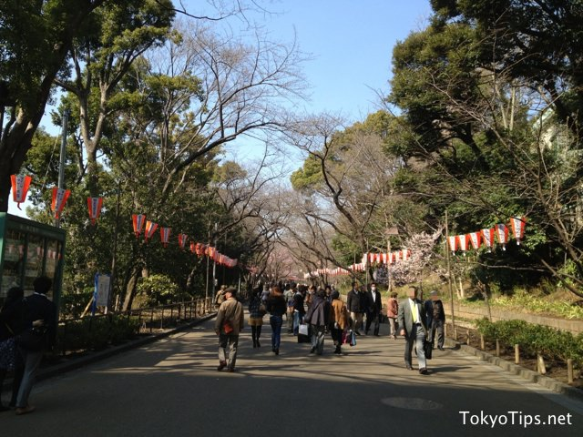 Someiyoshino trees planted along street in the park are not bloom yet.
