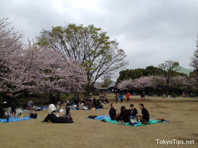 People enjoyed parties at Kitanomaru Park. They held their places under cherry trees, then ate and drank there.