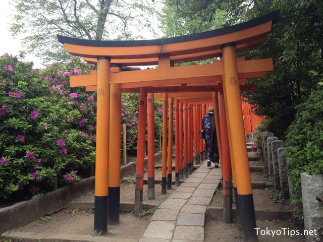 Small torii gateways stand at short intervals. Every torii is donated to this Nezu Shrine by somebody.