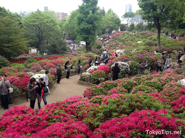 It was a small rainy day. But many people enjoyed azaleas.
