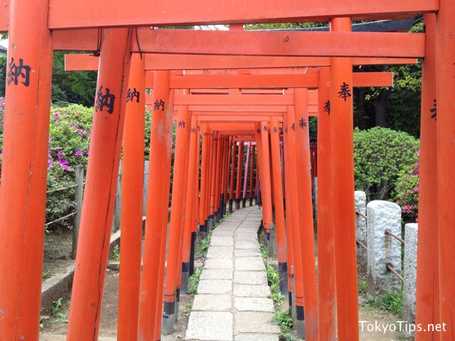 These torii gateways are short and narrow. So tall adult has to pass through them with low head.