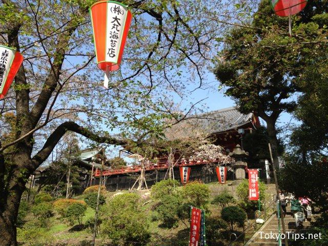 Kiyomizu-kannondo temple and cherry trees in Ueno Park.